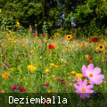 Bunte Blumenwiese